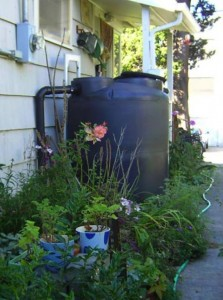 rain cistern or rain barrel