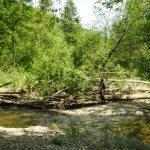 Chris Gower assessing large woody debris at Issaquah Creek.